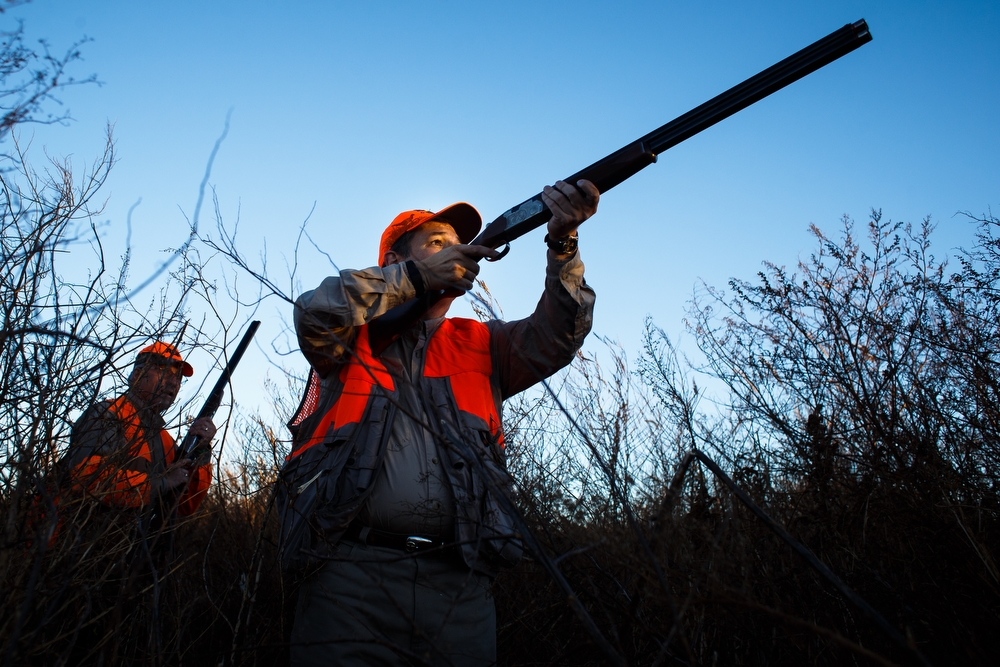 Republican presidential candidate Ted Cruz takes aim at a pheasant  during the Col. Bud Day Pheasant Hunt at The Hole N the Wall Lodge on Saturday, October 31, 2015 in Akron, Iowa.