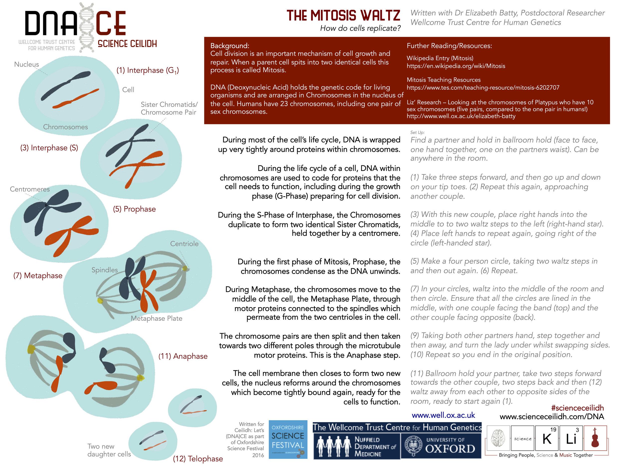 Mitosis Waltz Final.jpg