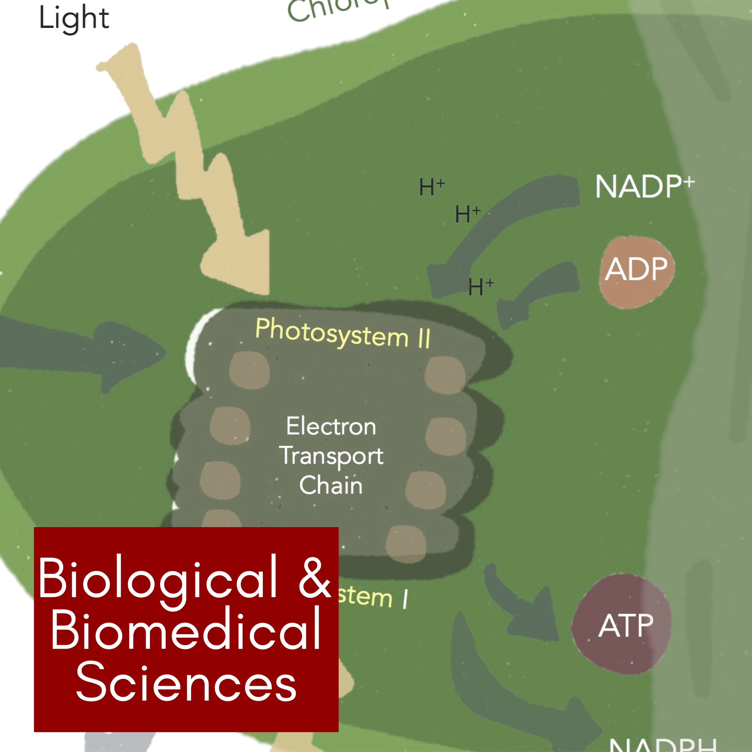 Biology/ Biomedical Sciences -