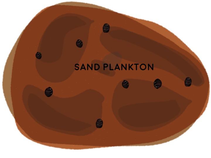 1) Sand Plankton Aerate