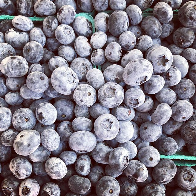 BLUEBERRIES 😍😍😍 Right now we have plenty of pre-picked blueberries available for those of you who don't want to pick in the hot sun ☀️ More details below: • Hours: 9am-5pm, Friday - Sunday CLOSED: Monday - Thursday ❤️NO ANIMALS ALLOWED❤️ U-pick blue/rasp/blackberries: $2.50/pound Pre-picked blueberries: $4.00/pound • • #columbiafarms #columbiafarmsupick #sauvieisland #pickyourown #raspberries #blueberries #blackberries