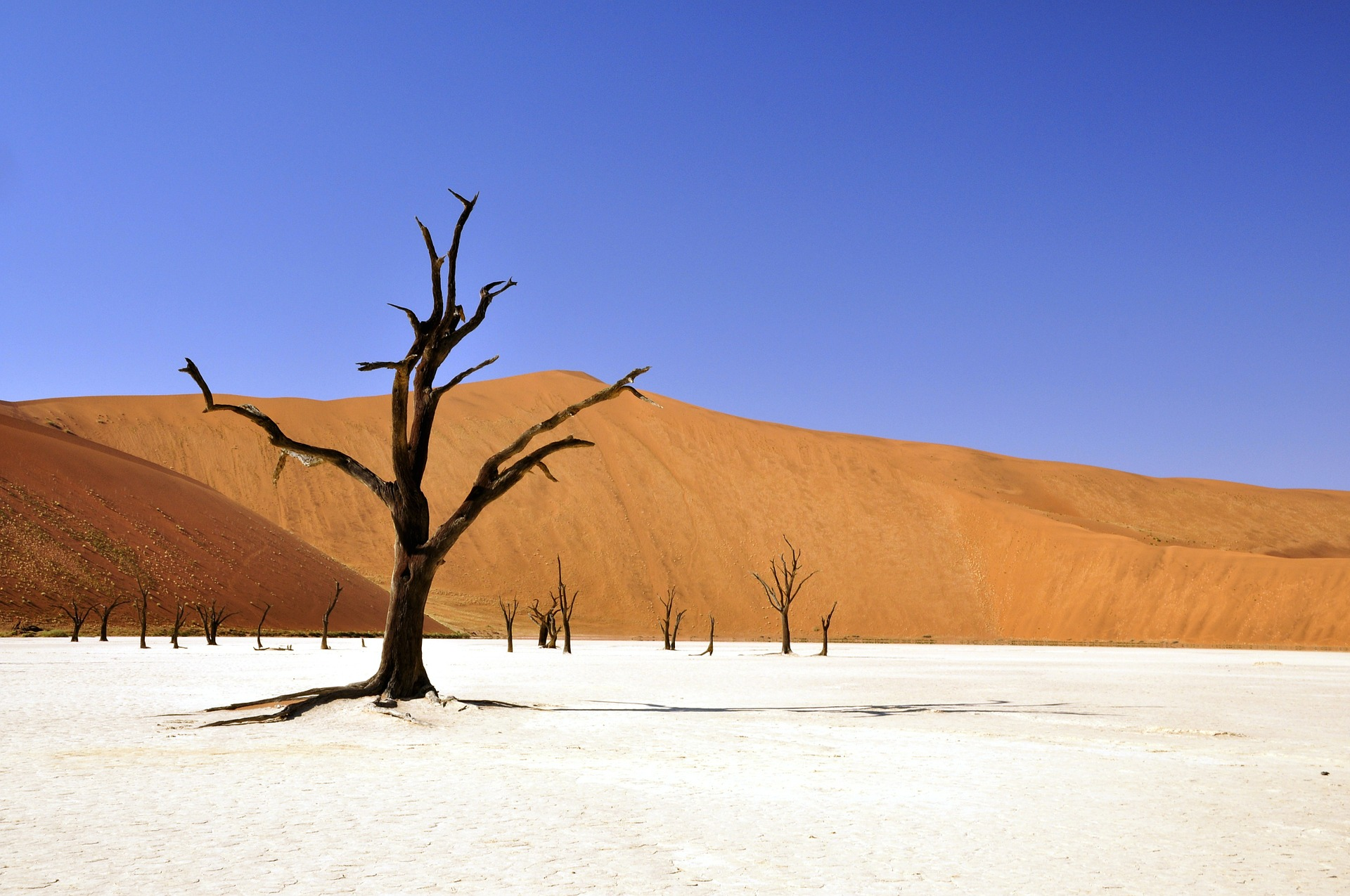 tree-desert-dali-pixabay-64311_1920.jpg