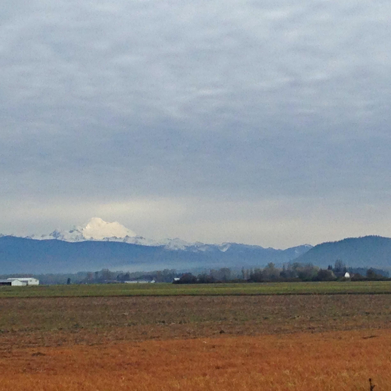 Mount Baker across the field.