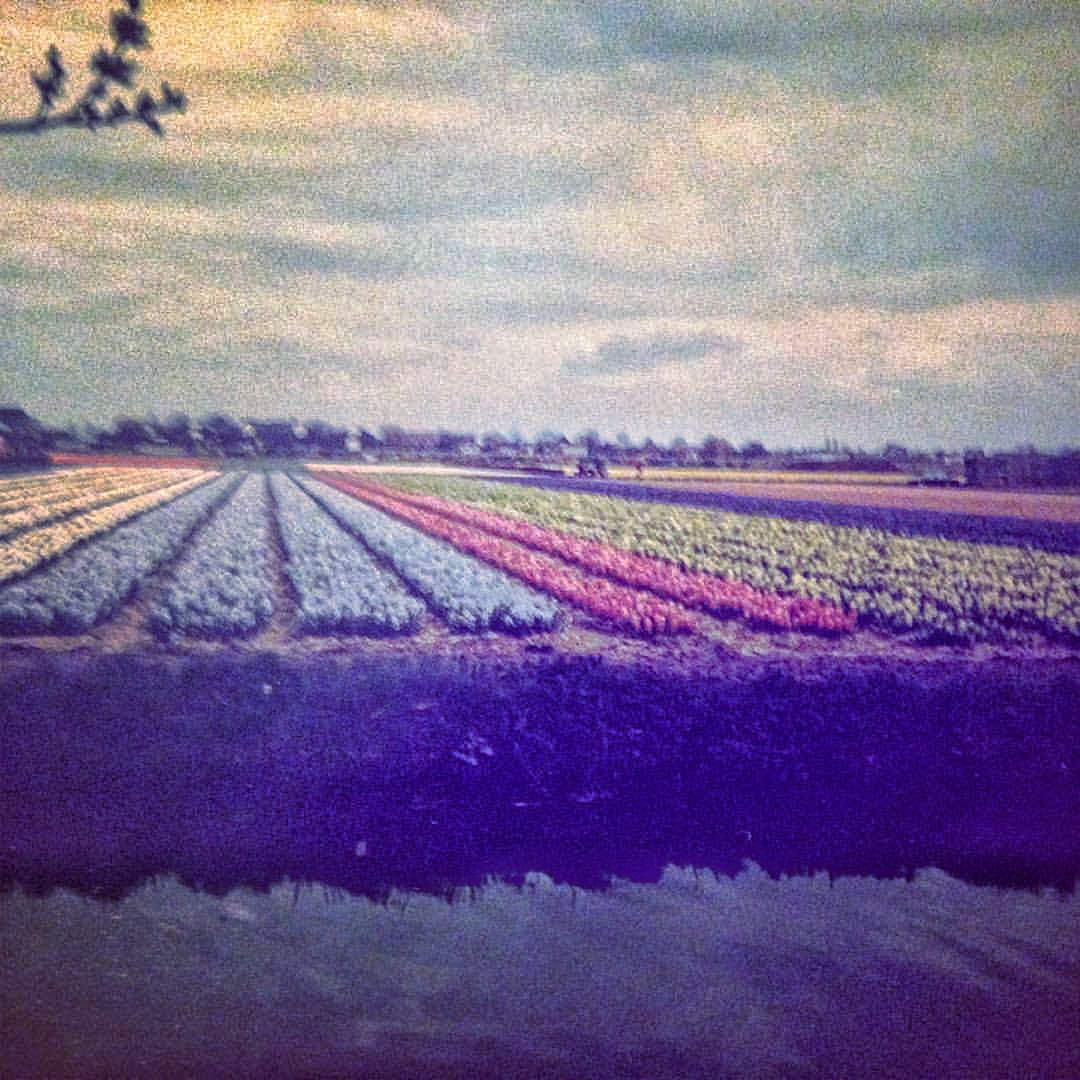 Tulips, Keukenhof Garden, Lisse, The Netherlands. 1985.