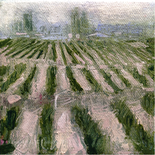 Budding Tulip field (1).jpg