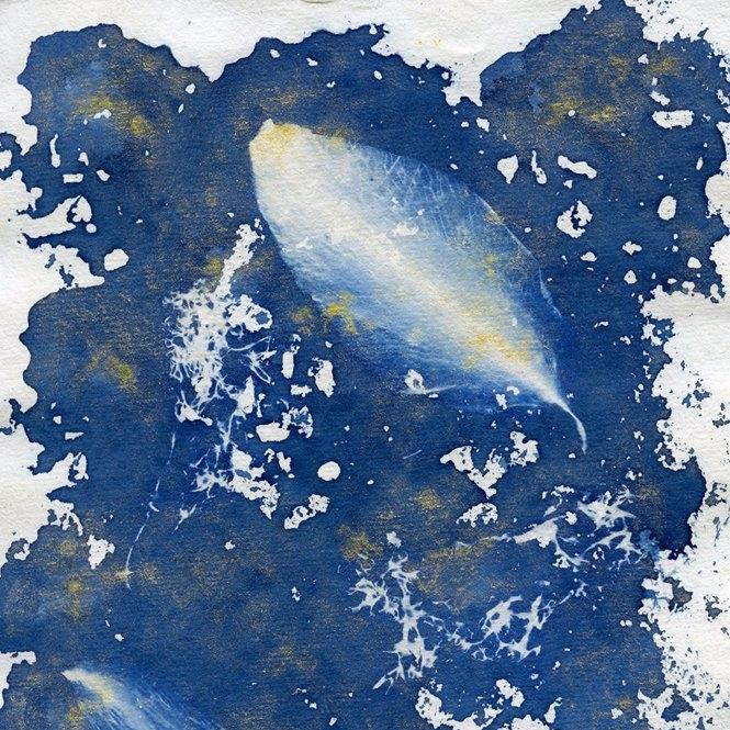 Cyanotype gold sea sponge 2014.jpg