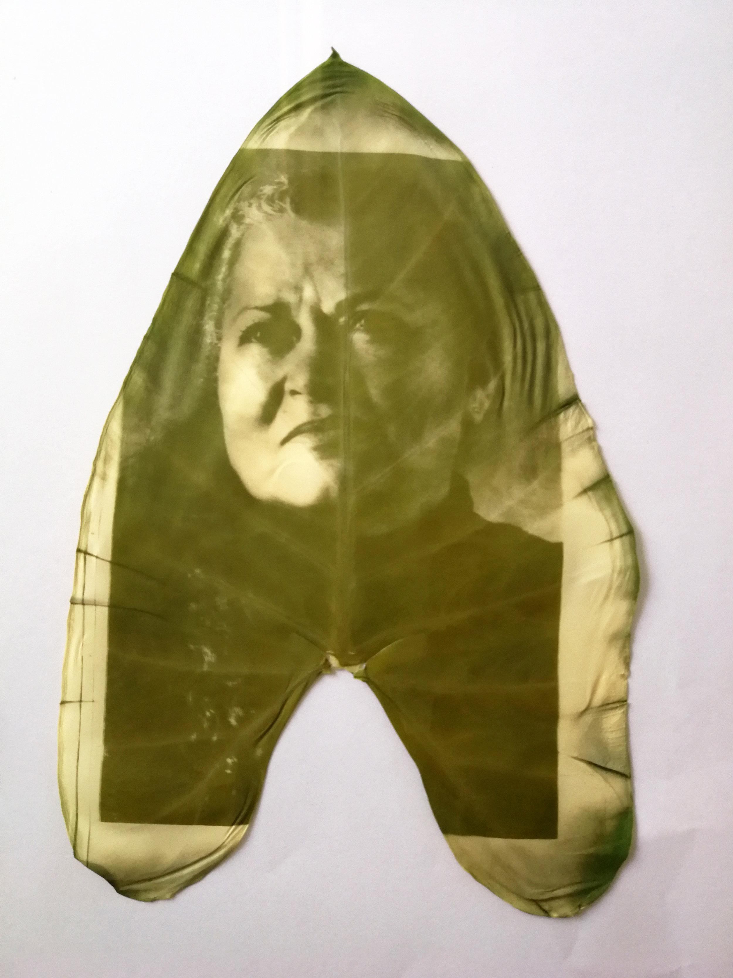 Colacasia leaf