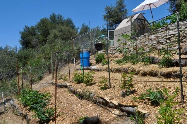 first year food forest 2012 tte.jpg