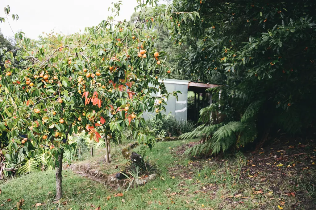 THE HIDE ON WOODBURN - Pearl Button have a beautiful private bush retreat cottage, airbnb accommodation at their property where you can get away for a weekend and have a fitting at the same time!