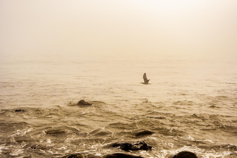 Misty_10.jpg