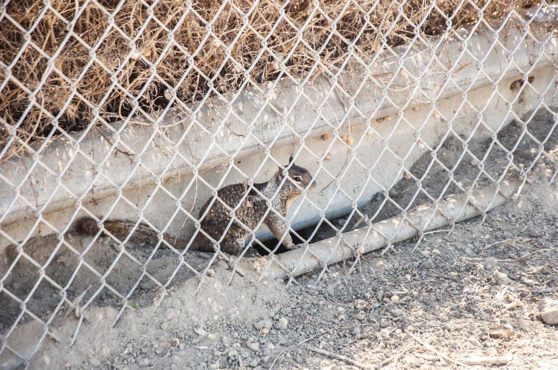 Squirrel in prison