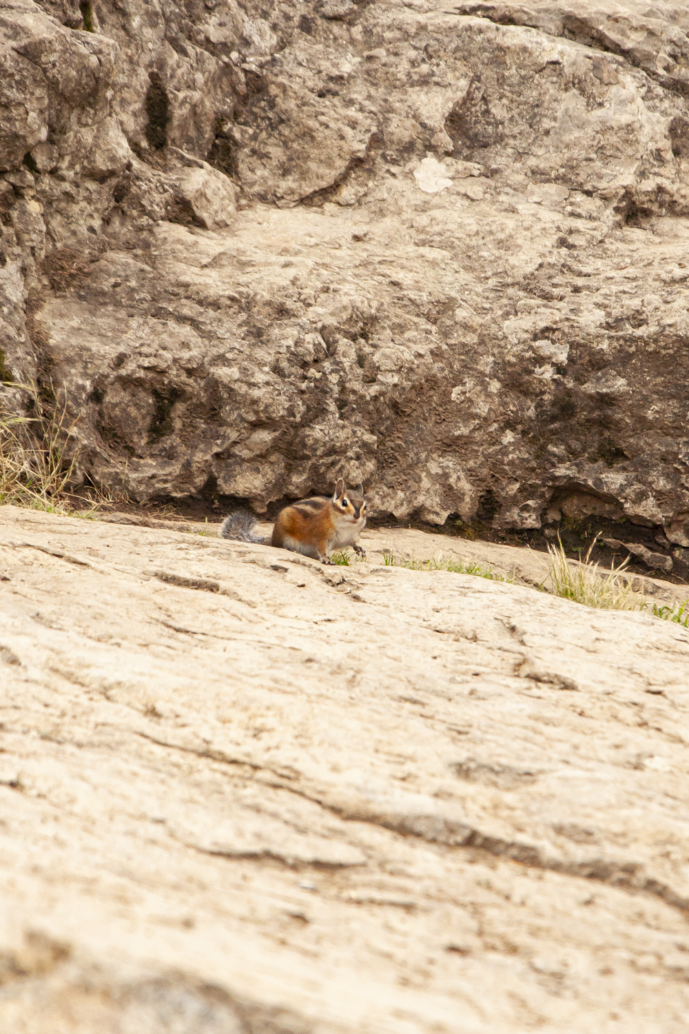 Chipmunks at the peak. Looking for hikers to throw them a bite most likely. They were bold around us humans.