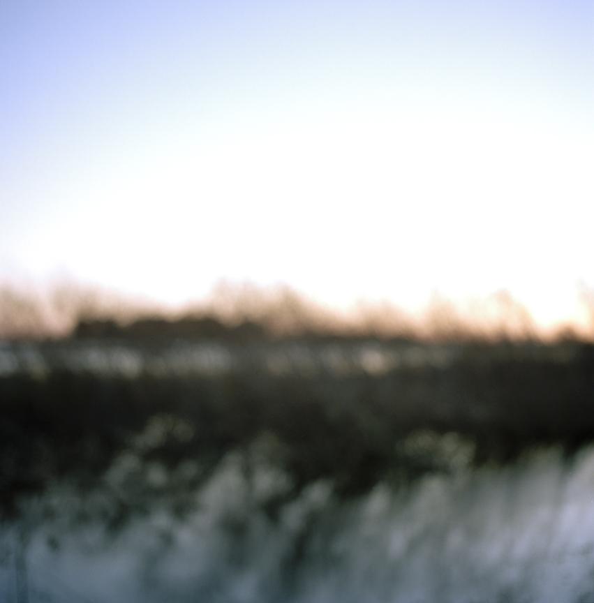 Tybee Grasses