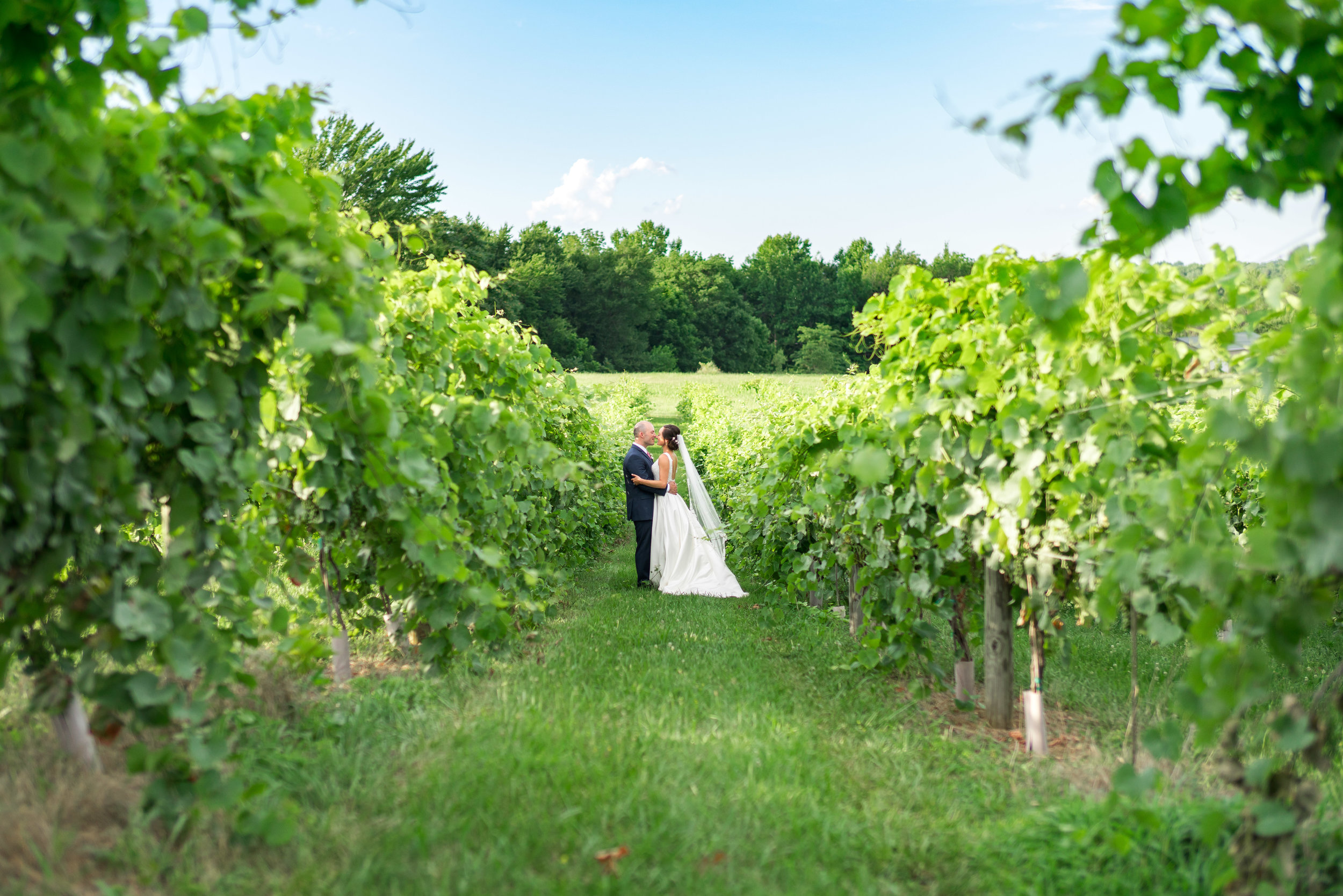 Springfield Manor vineyard wedding photos