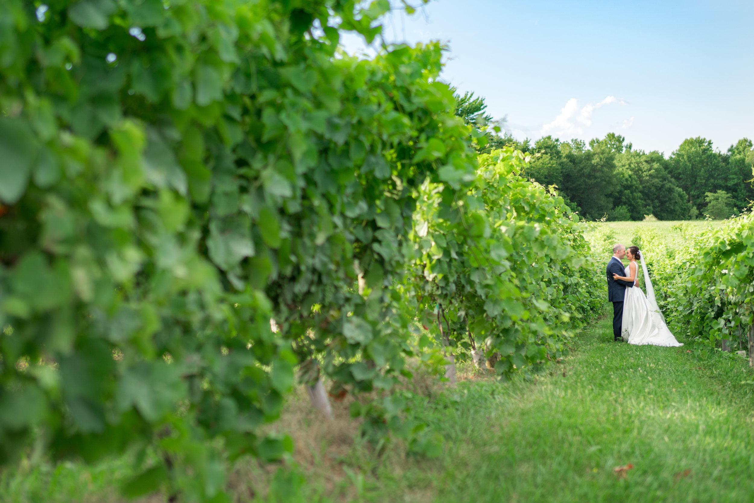 Summer July vineyard wedding in Virginia and Maryland