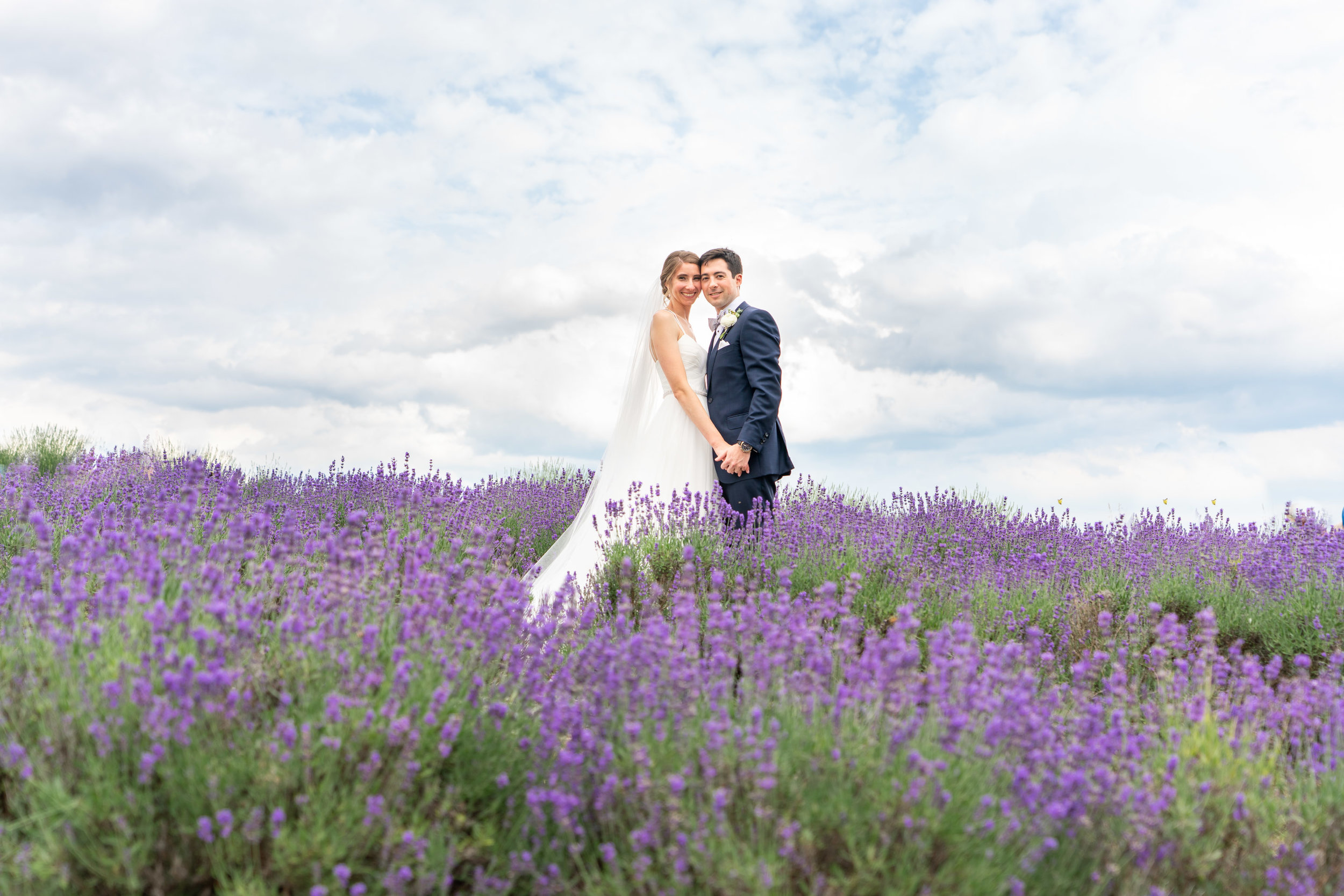 Bride and groom in a lavender field during lavender fest at Springfield Manor