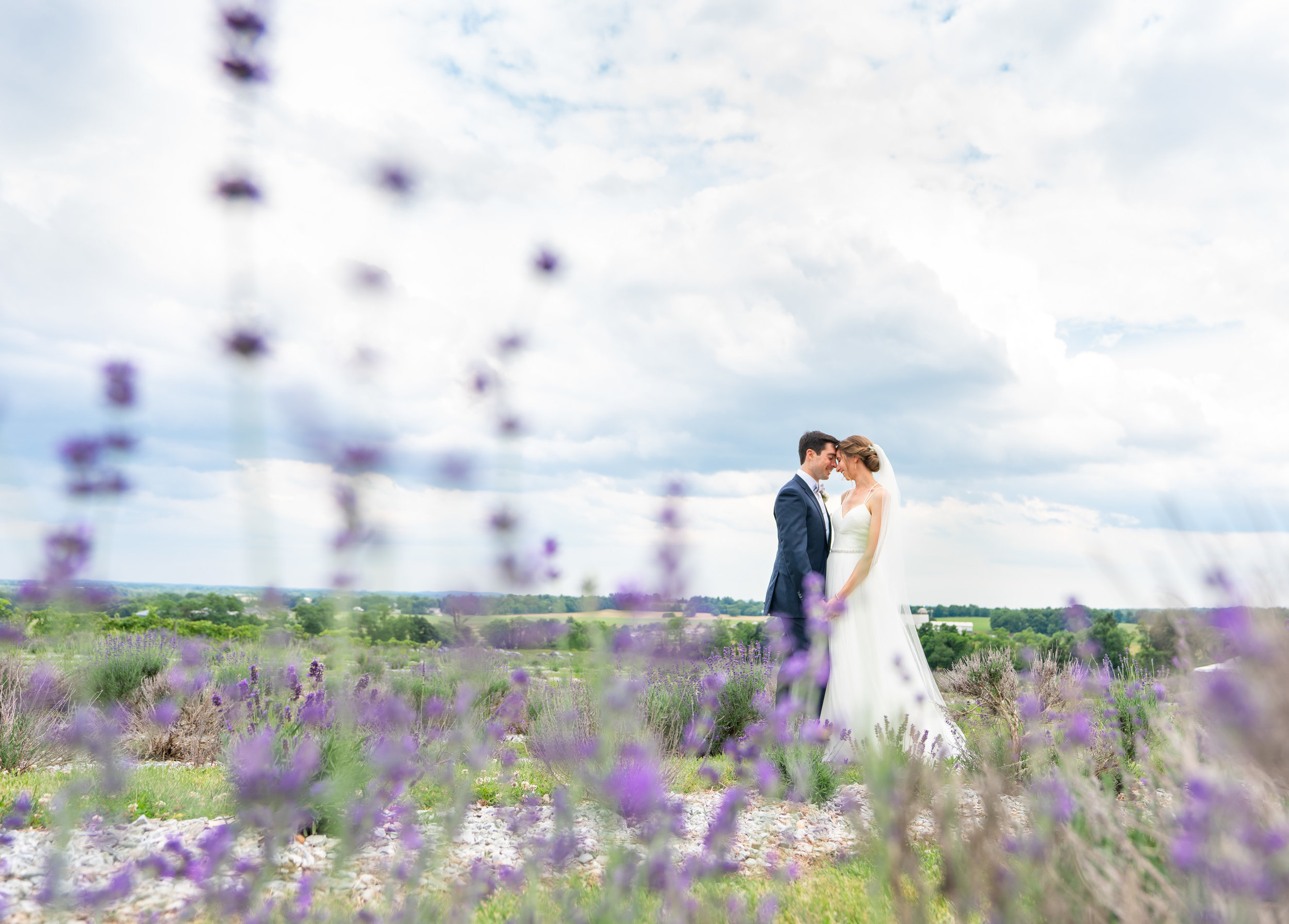 Bride and groom standing in lavender field at Springfield Manor Winery and Distillery