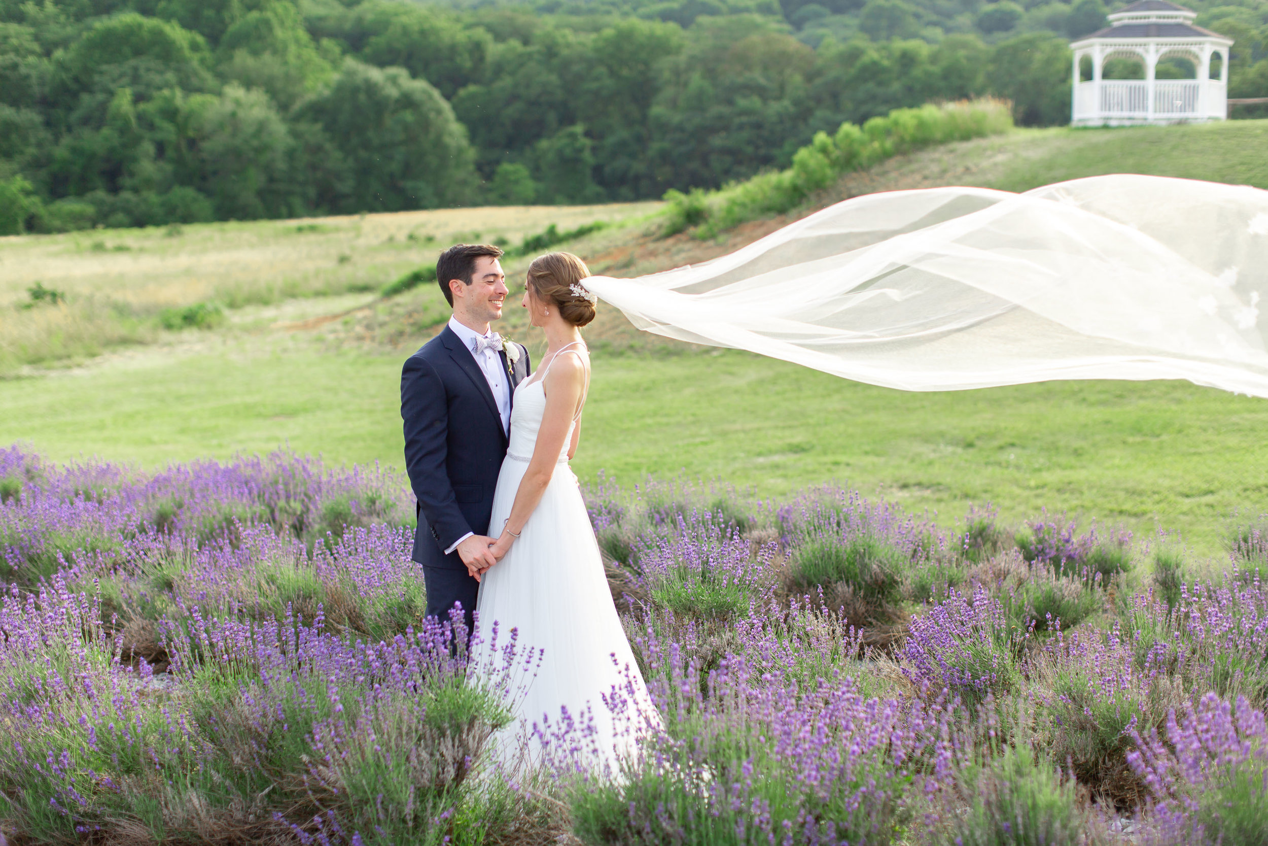 Bride and groom with Lovely Bride veil in the wind in lavender fields at Springfield Manor