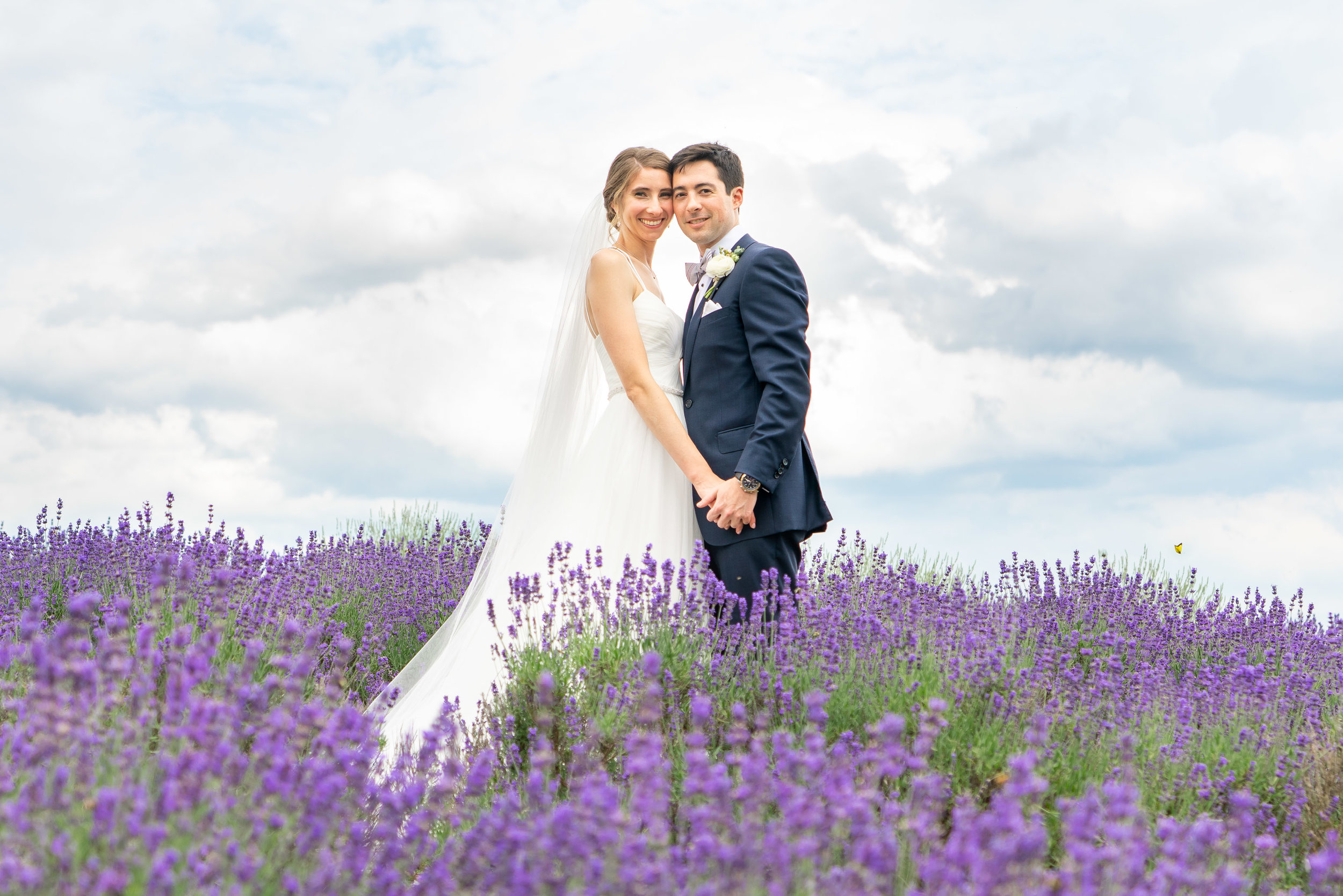 Bride and groom posing in lavender field at Springfield Manor Winery and Distillery