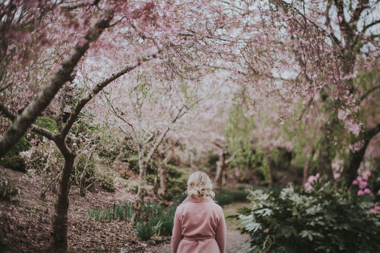 Japanese blossom garden