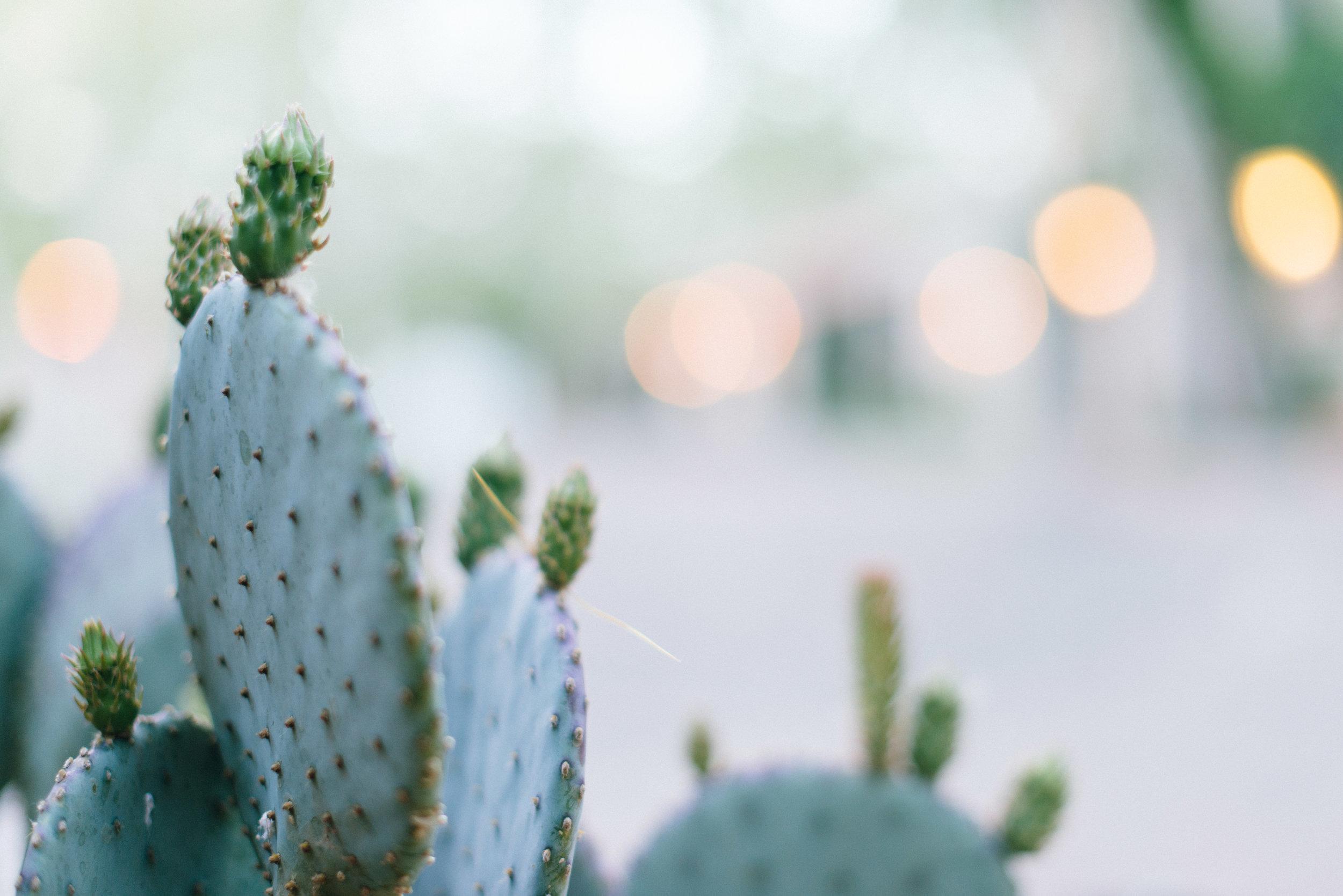 Carley Rudd Photography - Sedona Arizona