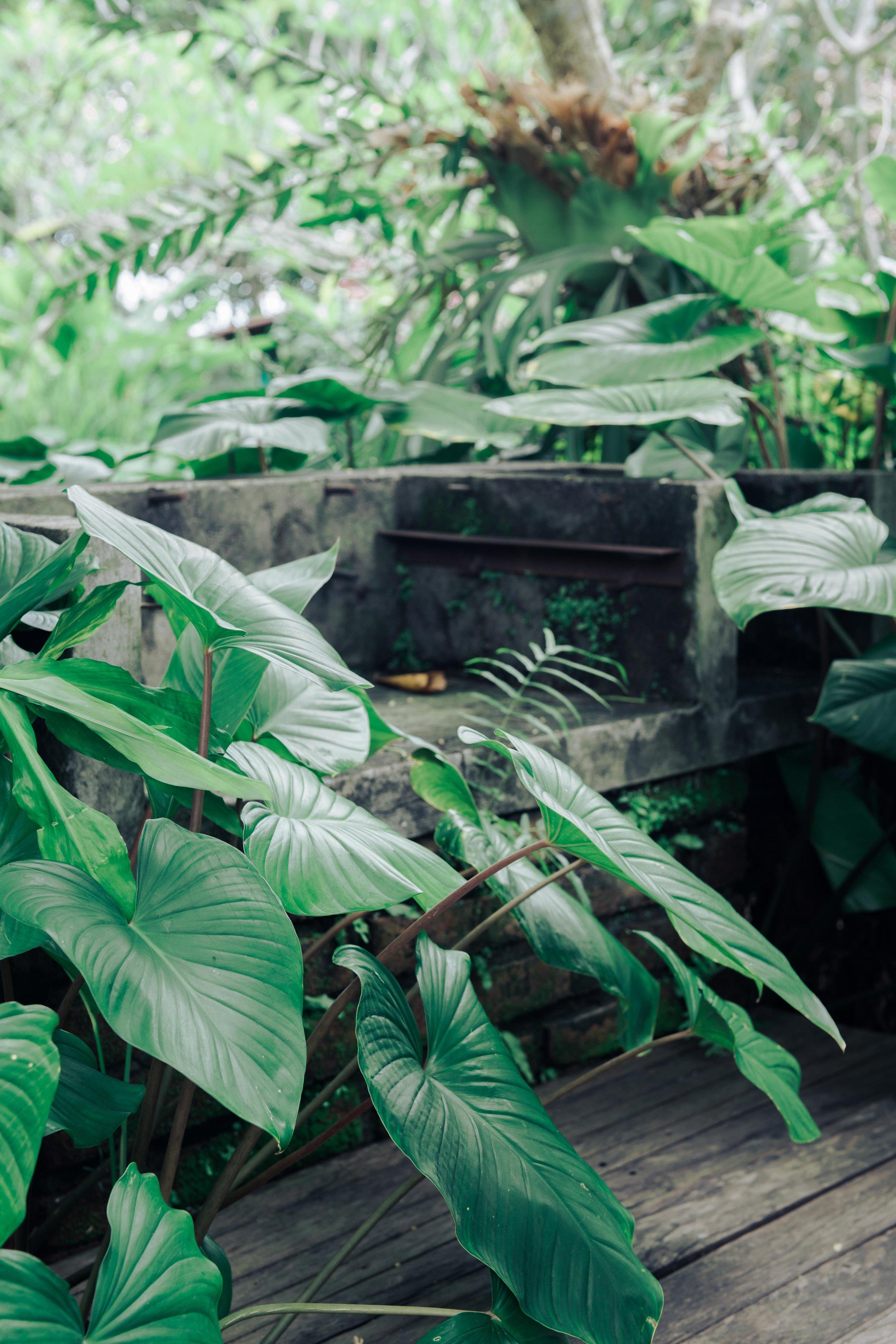 Carley Rudd Photography - Ubud Bali Omah Apik