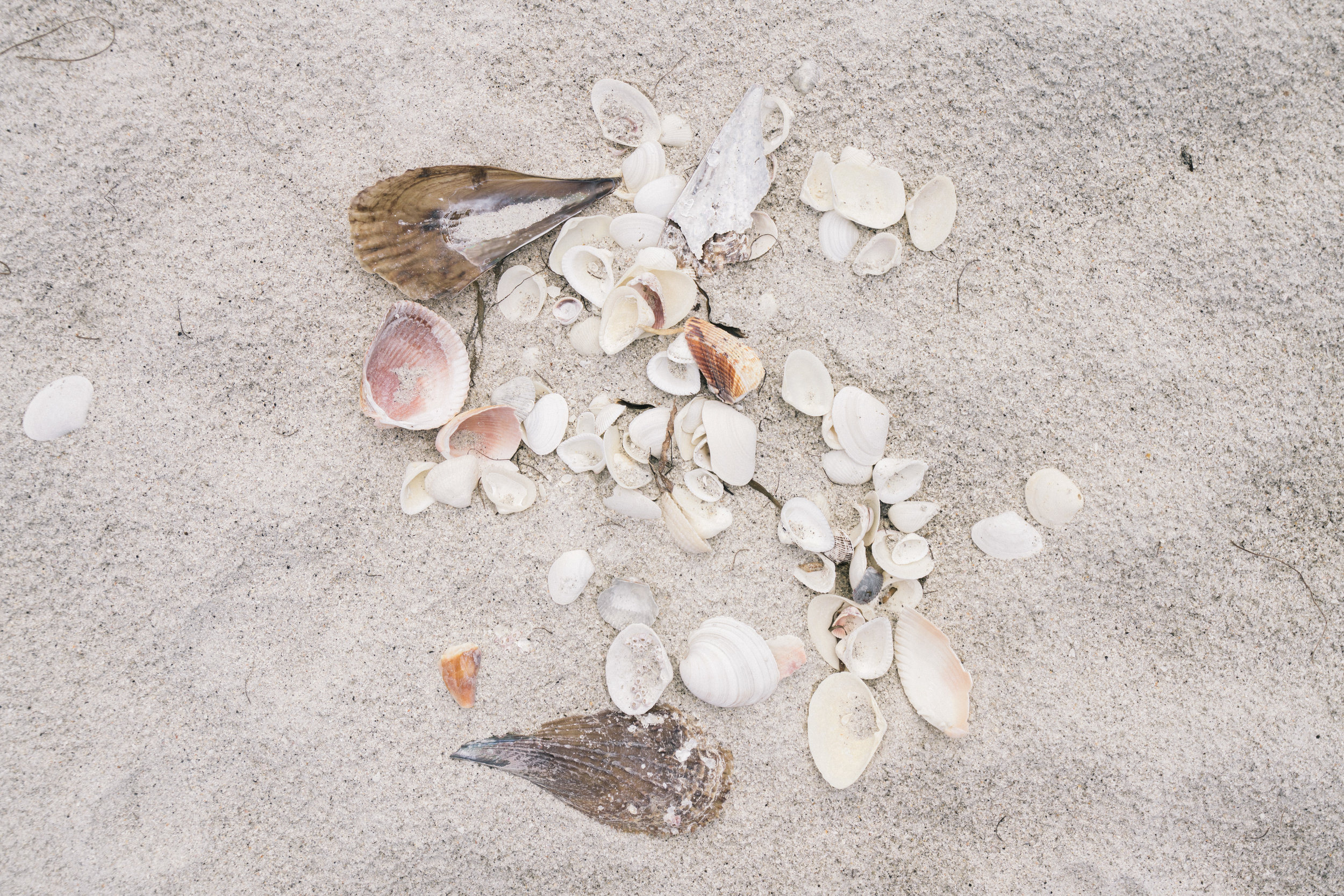 Cayo Costa Shells