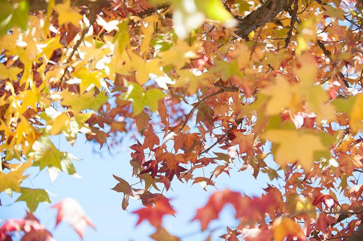 leaves_01.jpg