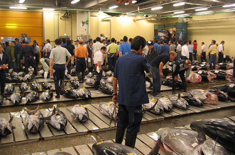 Tonfiskauktion på fiskmarknaden i Tsukiji. Japaner äter upp 80% av all blåfenad tonfisk som fångas globalt!