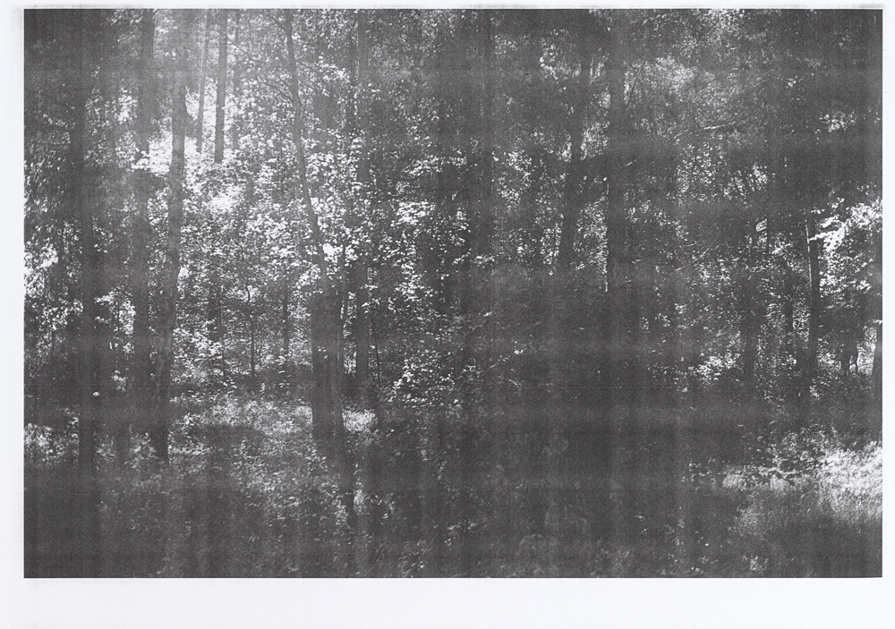 Wald (for transparency), 2015, © Wolfgang Tillmans, Courtesy Galerie Buchholz, Berlin/Cologne, Maureen Paley, London and David Zwirner, New York
