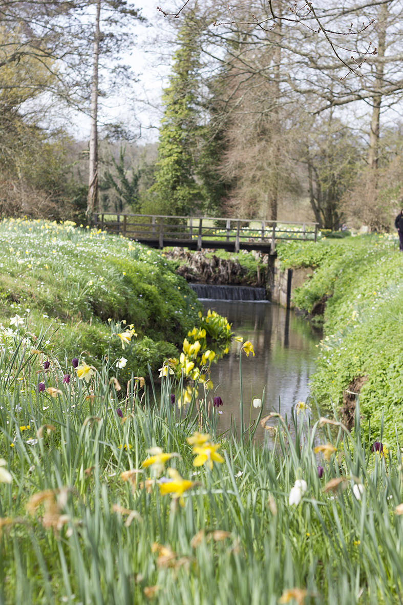 The River Dudwell, Narcissi, Wood anemone & Snake's head fritillary (or Chequered daffodil)