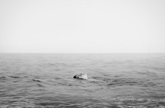 la photographe espagnole  Andrea Torres Balaguer  ,