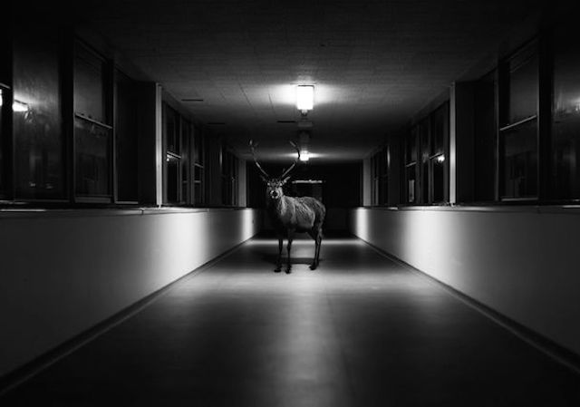photographer  Jason Mc Groarty 's work