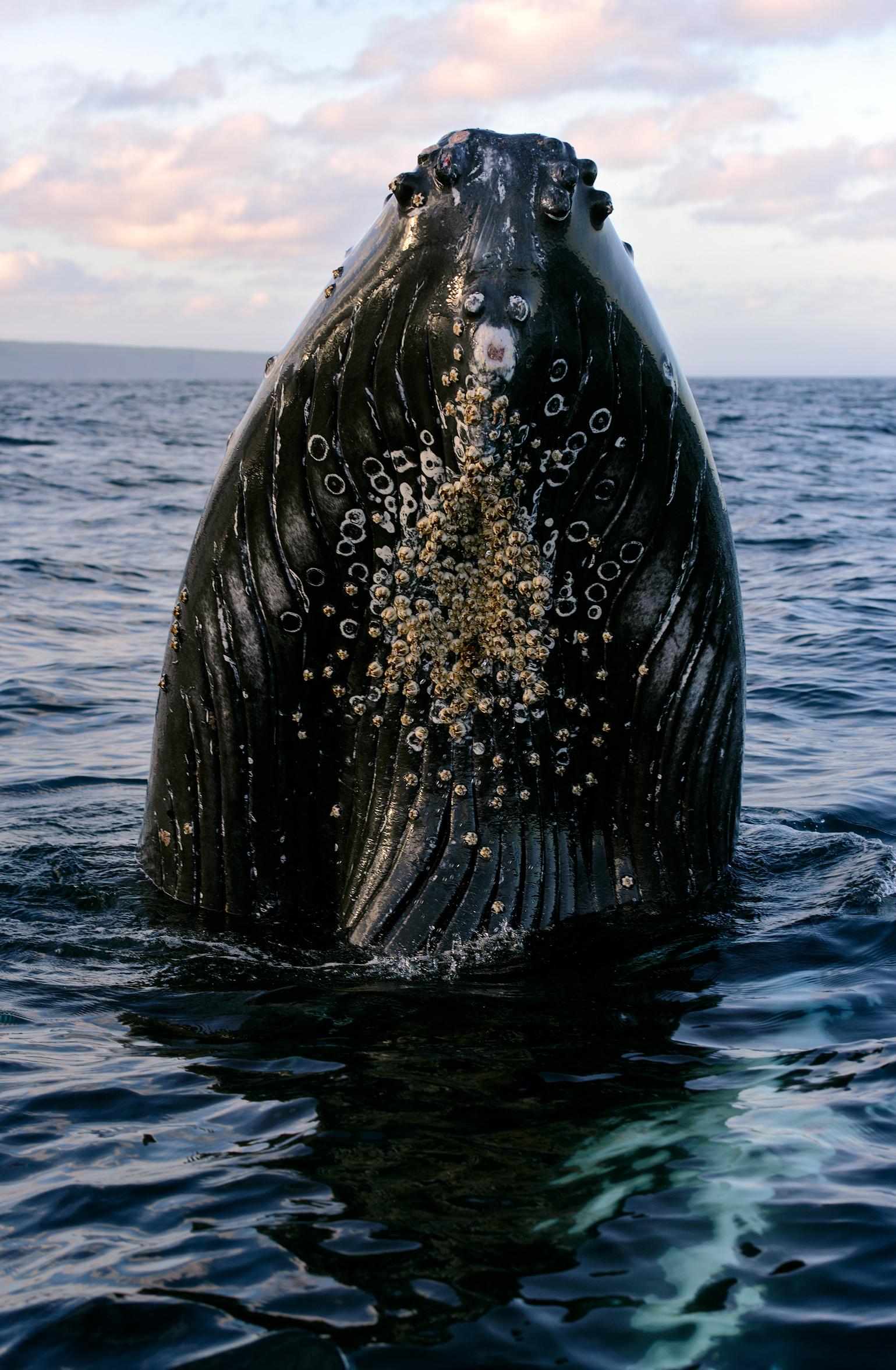 2014_Whale_July_5.jpg