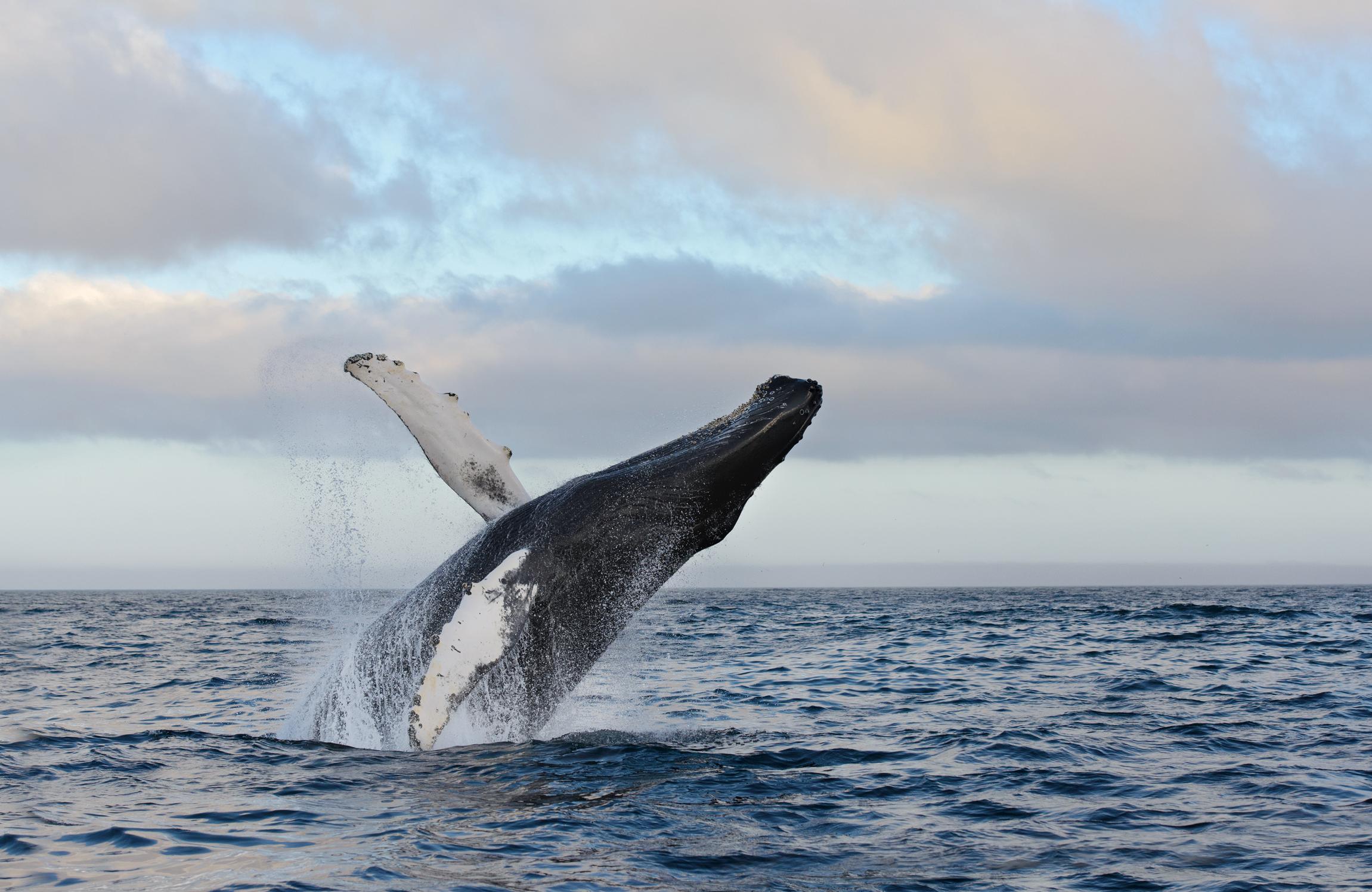 2014_Whale_July_10.jpg