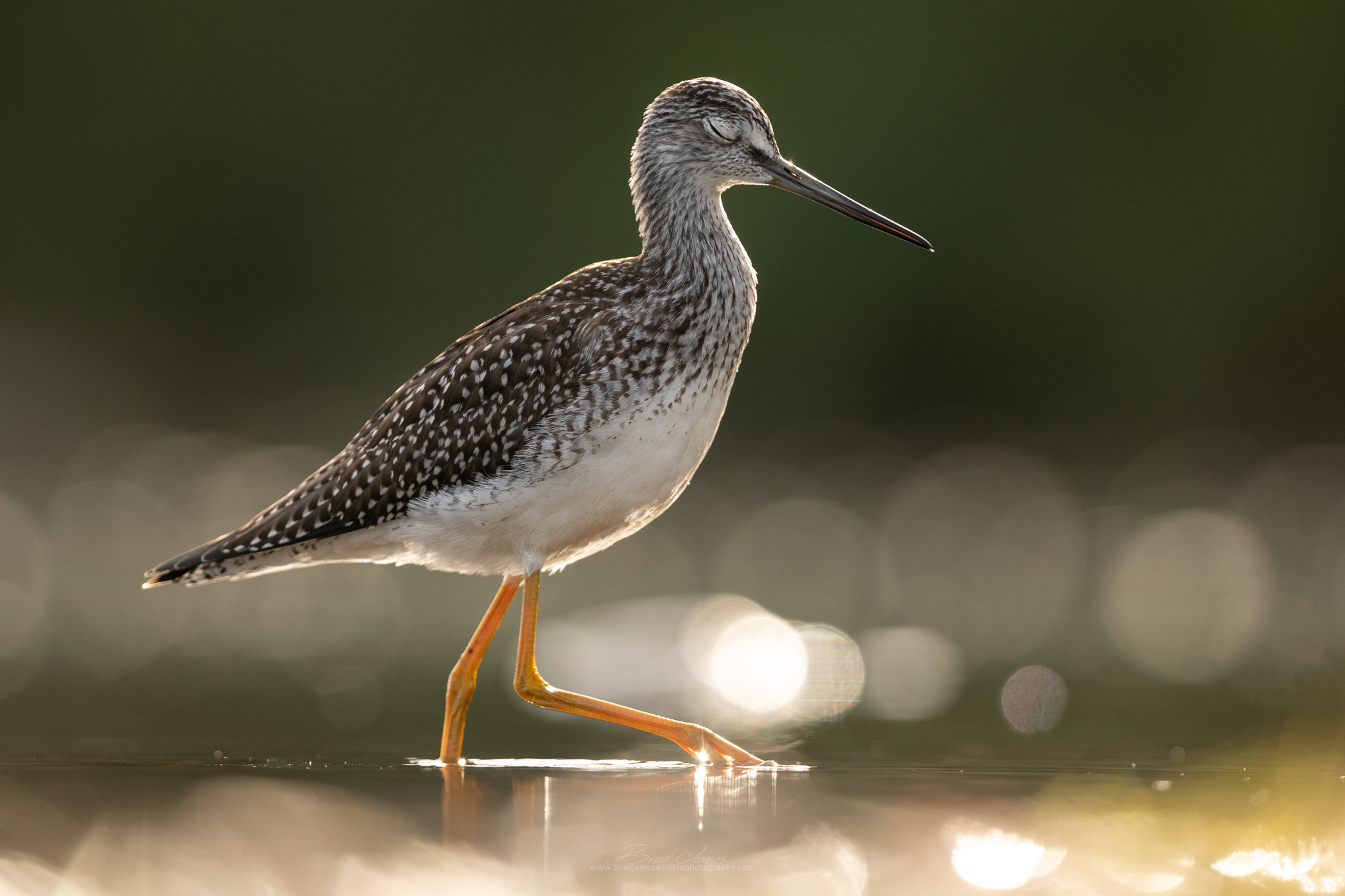 2018_YellowLegs_Aug_8_2048.png