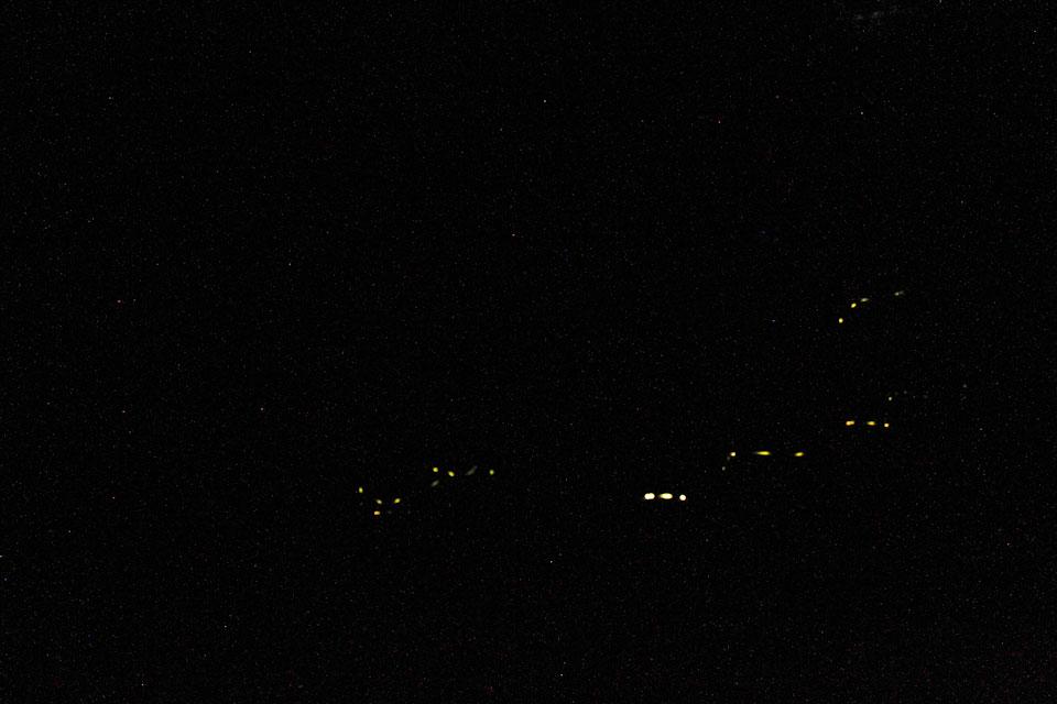 KB_synchronizedfireflies-0065.jpg