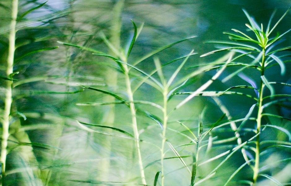 KB_summergreens_0334.jpg