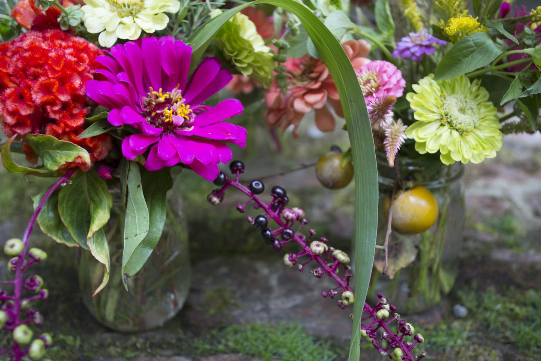 zinnias and fall color-7134.jpg