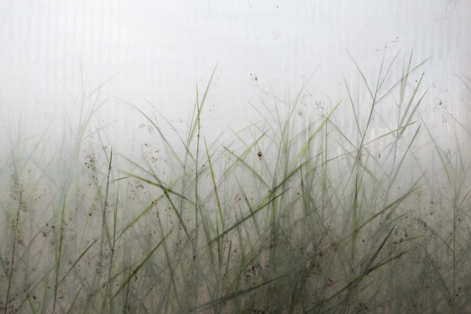 greenhouse grasses-6035.jpg