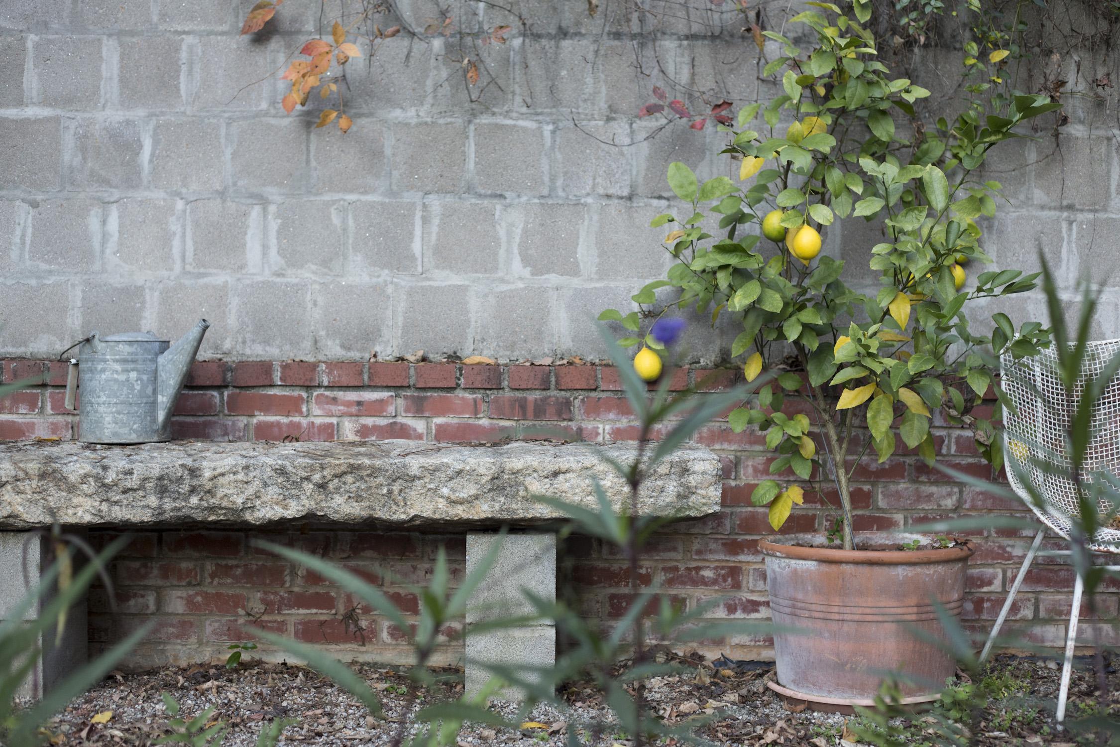 my_fall_garden_for terrain-9193.jpg