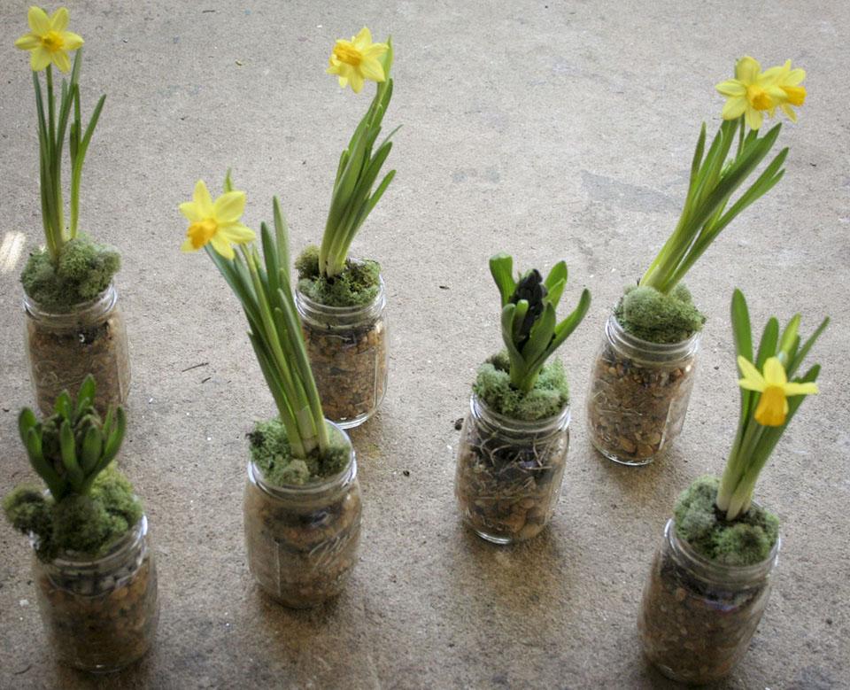 daffodils_hyacinth_in mason jars with pebbles-1962.jpg