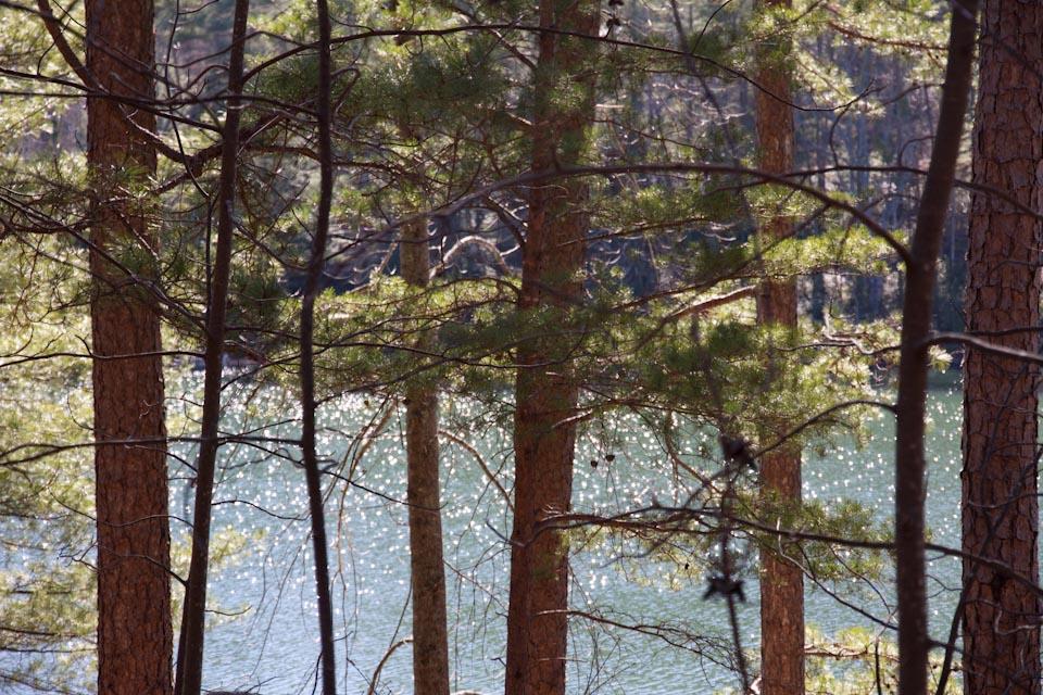 KB_trees+water-8357.jpg
