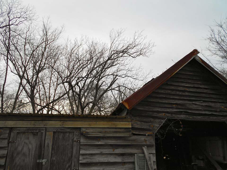 RW_homesteadremains-0966.JPG