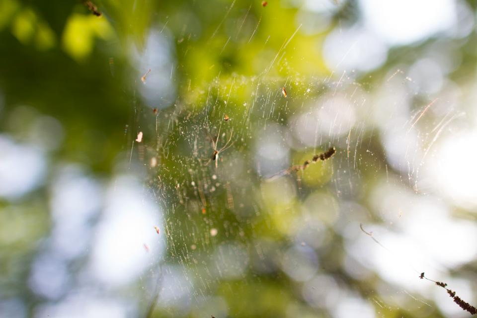 KB_spiderswork-0196.jpg