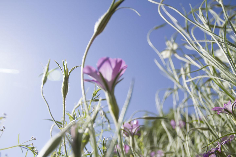 purple flower and sky-3619.jpg