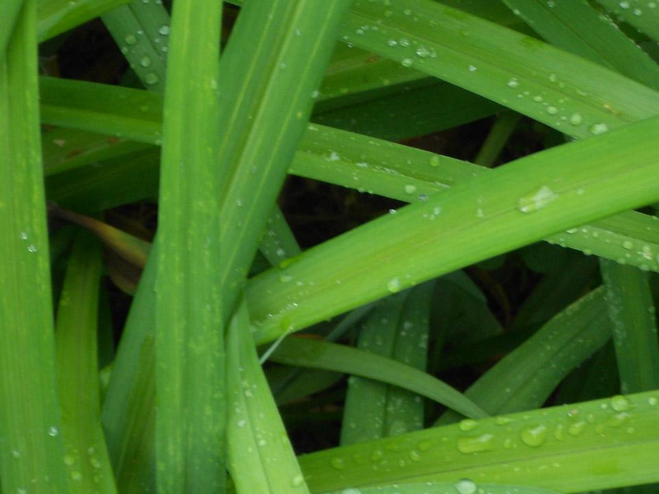 RW_dew+grass-2027.JPG