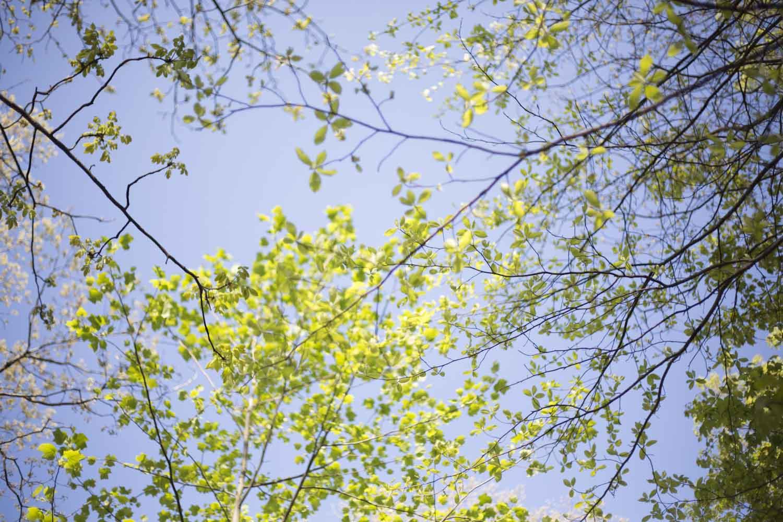 jasper county_springtime-7752.jpg