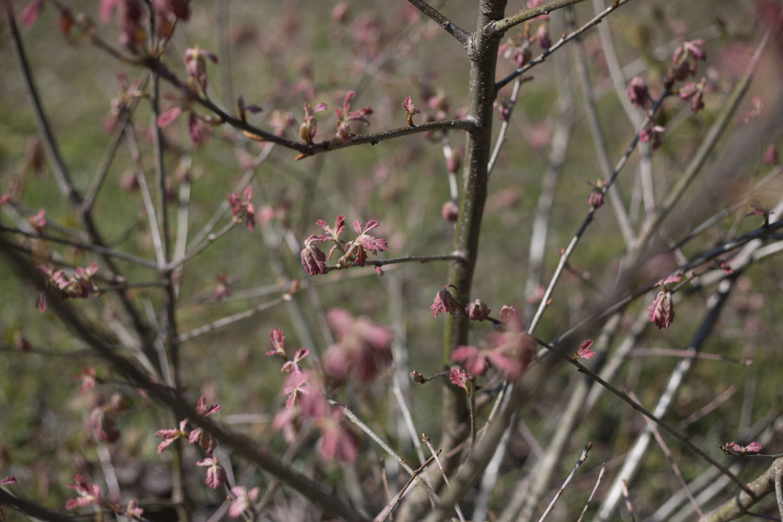 jasper county_springtime-7812.jpg