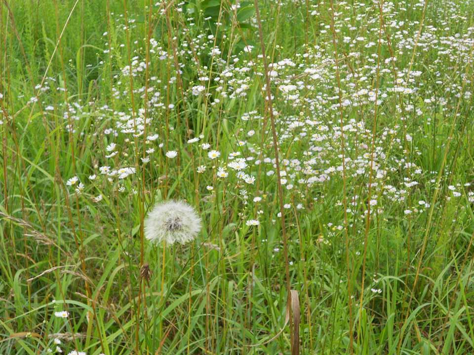 RW_wildflowers-3886.JPG